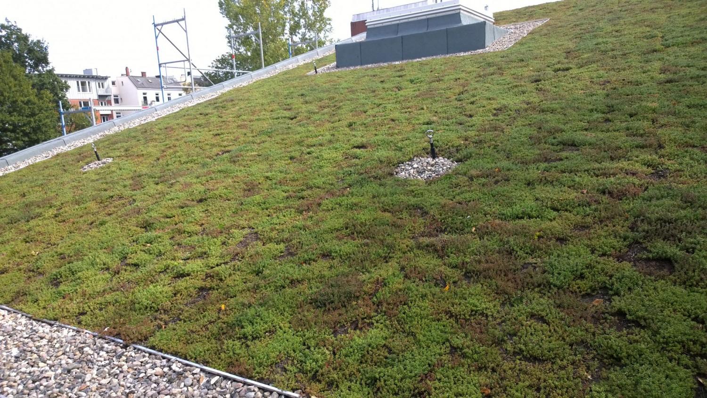 Naumann-Landschaft-Regenwassermanagement-20 Naumann – Landschaft